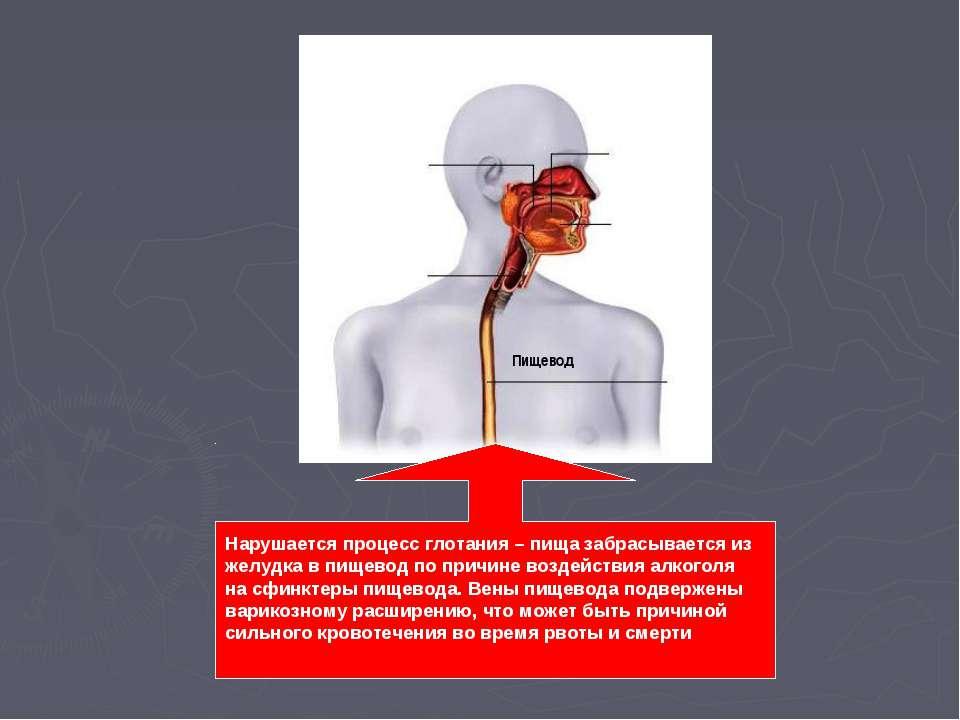 Пищевод Нарушается процесс глотания – пища забрасывается из желудка в пищевод...