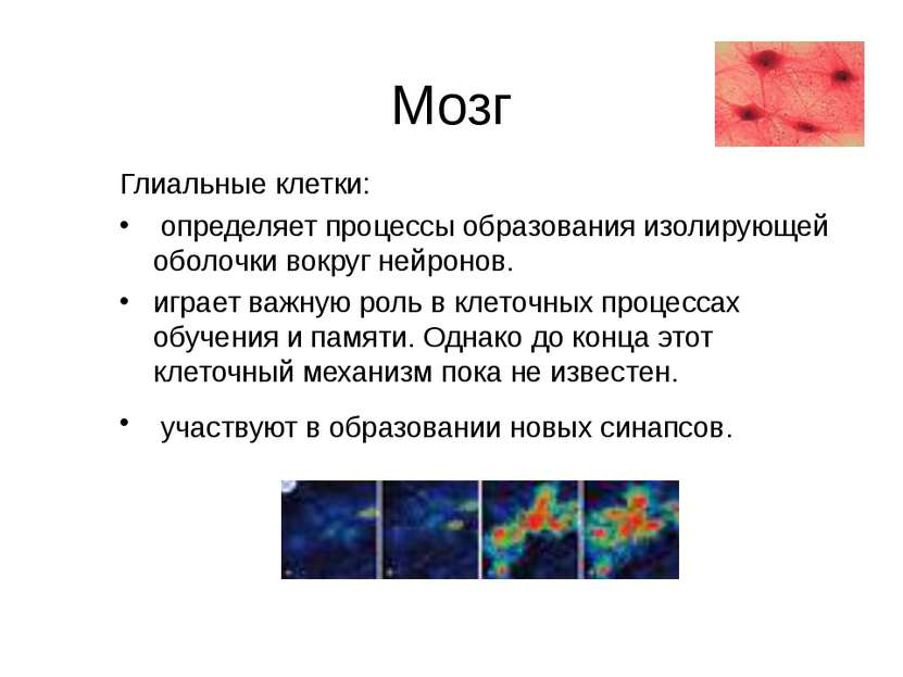 Мозг Глиальные клетки: определяет процессы образования изолирующей оболочки в...