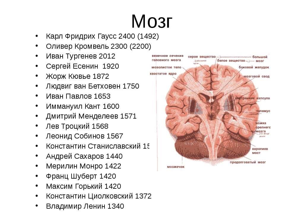 Мозг Карл Фридрих Гаусс 2400 (1492) Оливер Кромвель 2300 (2200) Иван Тургенев...