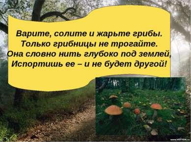 Варите, солите и жарьте грибы. Только грибницы не трогайте. Она словно нить г...
