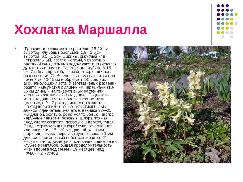 Хохлатка Маршалла Травянистое многолетне растение 15-20 см высотой. Клубень н...