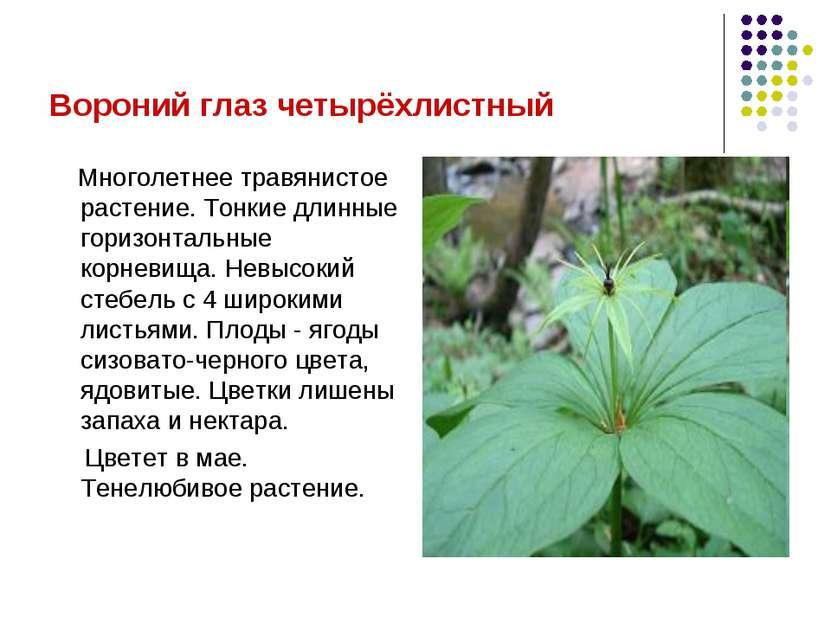 Вороний глаз четырёхлистный Многолетнее травянистое растение. Тонкие длинные ...
