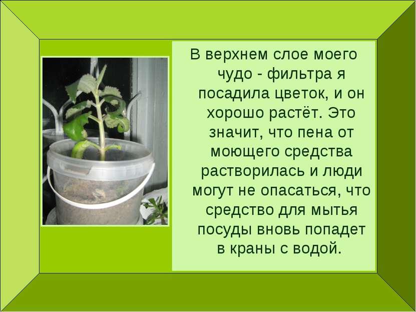 В верхнем слое моего чудо - фильтра я посадила цветок, и он хорошо растёт. Эт...