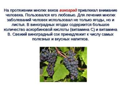 На протяжении многих веков виноград привлекал внимание человека. Пользовался ...