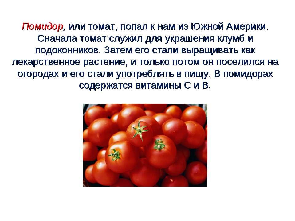 Помидор, или томат, попал к нам из Южной Америки. Сначала томат служил для ук...