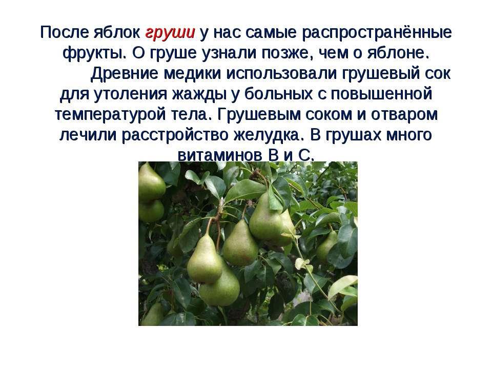 После яблок груши у нас самые распространённые фрукты. О груше узнали позже, ...