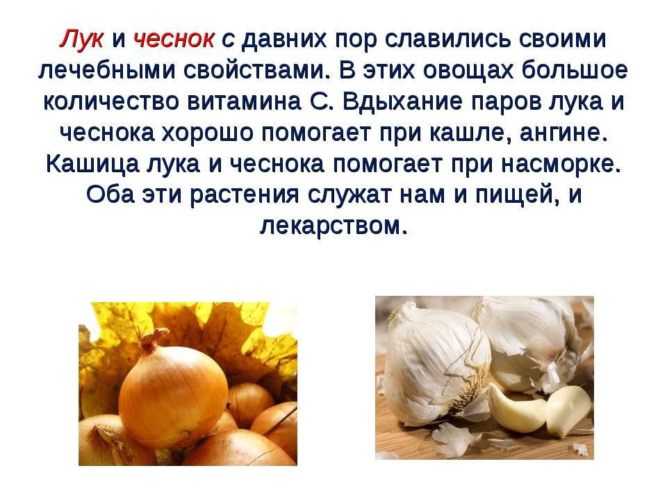Лук и чеснок с давних пор славились своими лечебными свойствами. В этих овоща...