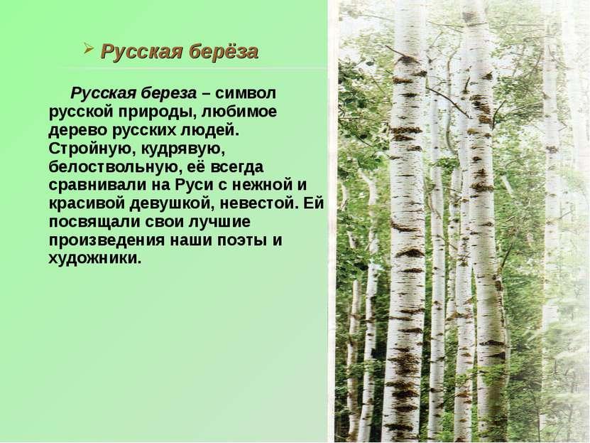 Русская берёза Русская береза – символ русской природы, любимое дерево русски...
