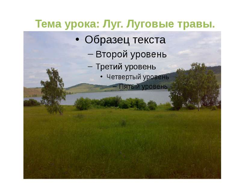 Тема урока: Луг. Луговые травы.