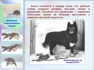 ЧУВАШСКАЯ РЕСПУБЛИКА, г. ШУМЕРЛЯ, МОУ «СОШ №2» Балто относится к породе хаски...