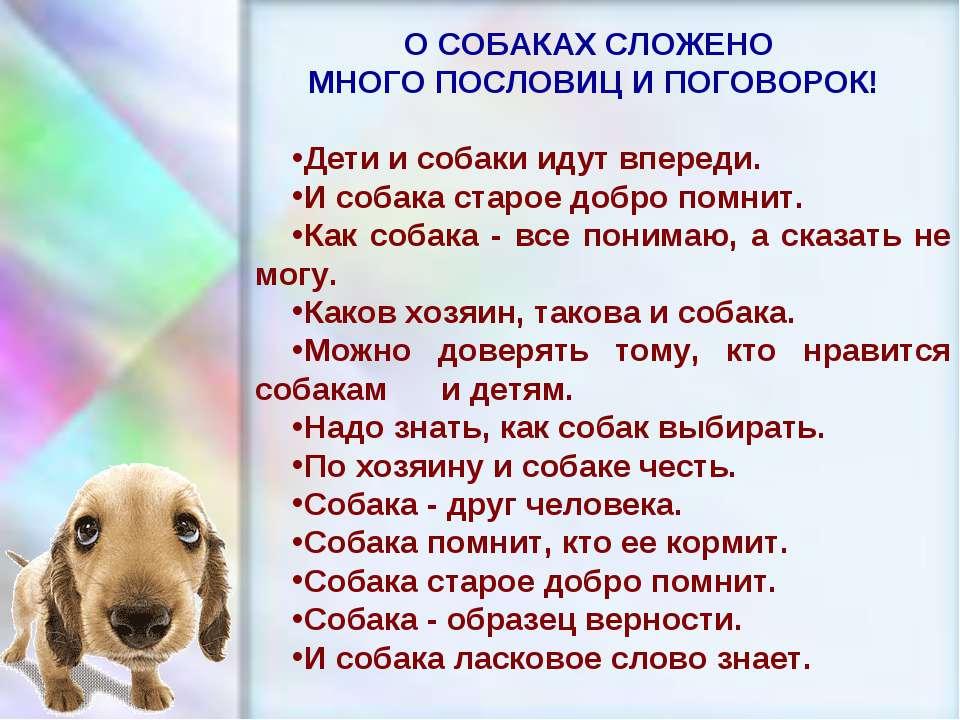Поговорка пес старый