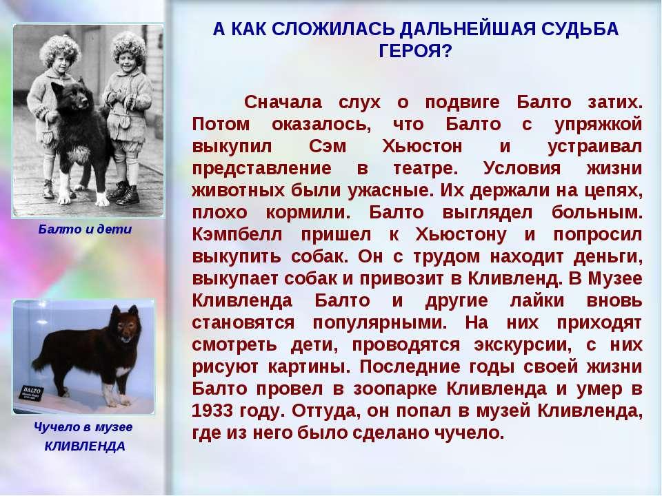 ЧУВАШСКАЯ РЕСПУБЛИКА, г. ШУМЕРЛЯ, МОУ «СОШ №2» Сначала слух о подвиге Балто з...