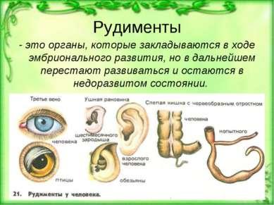 Рудименты - это органы, которые закладываются в ходе эмбрионального развития,...