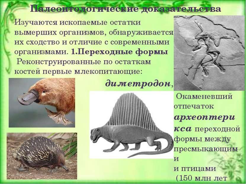 Изучаются ископаемые остатки вымерших организмов, обнаруживается их сходство ...
