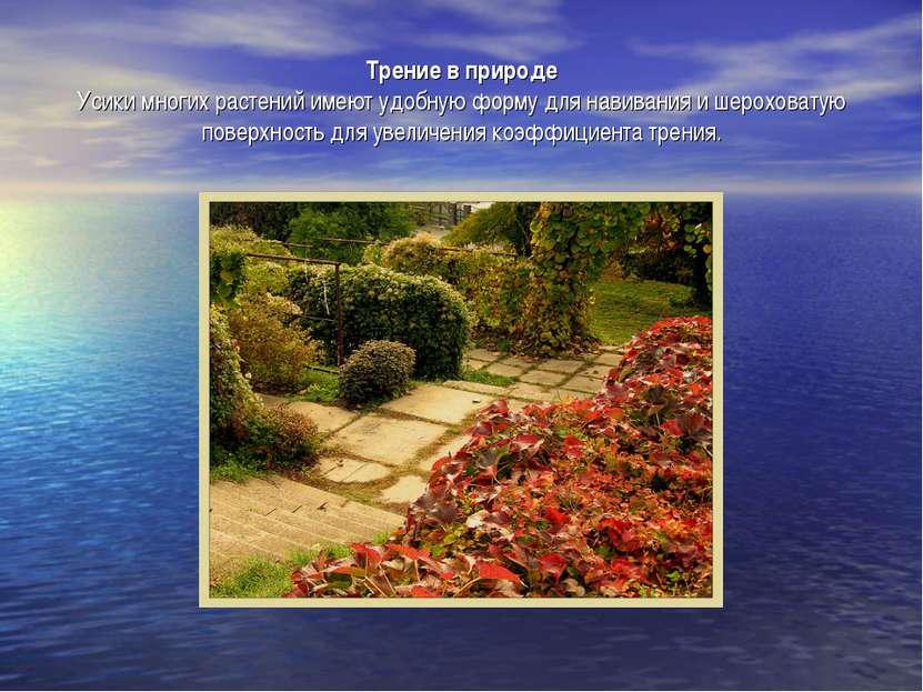 Трение в природе Усики многих растений имеют удобную форму для навивания и ше...