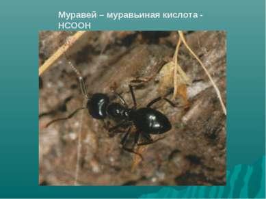 Муравей – муравьиная кислота - НСООН
