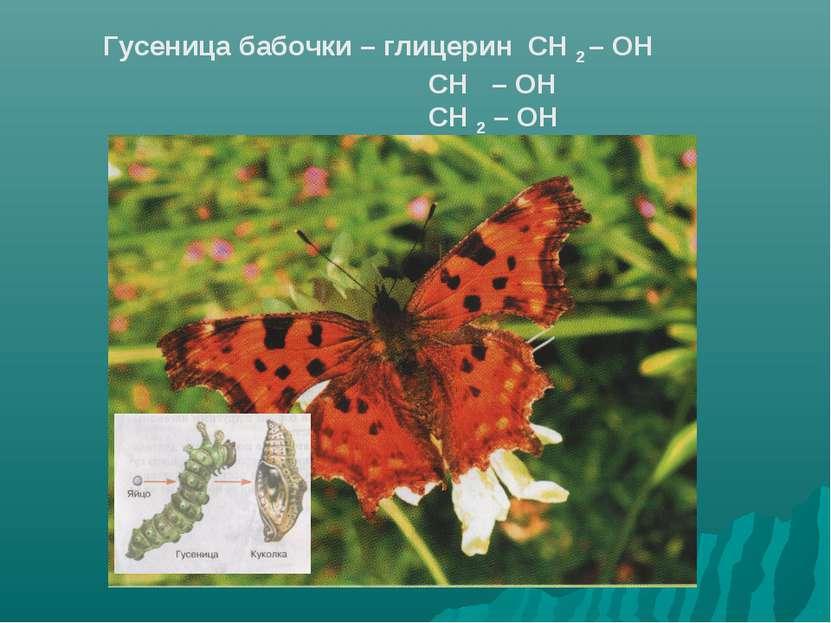 Гусеница бабочки – глицерин СН 2 – ОН СН – ОН СН 2 – ОН