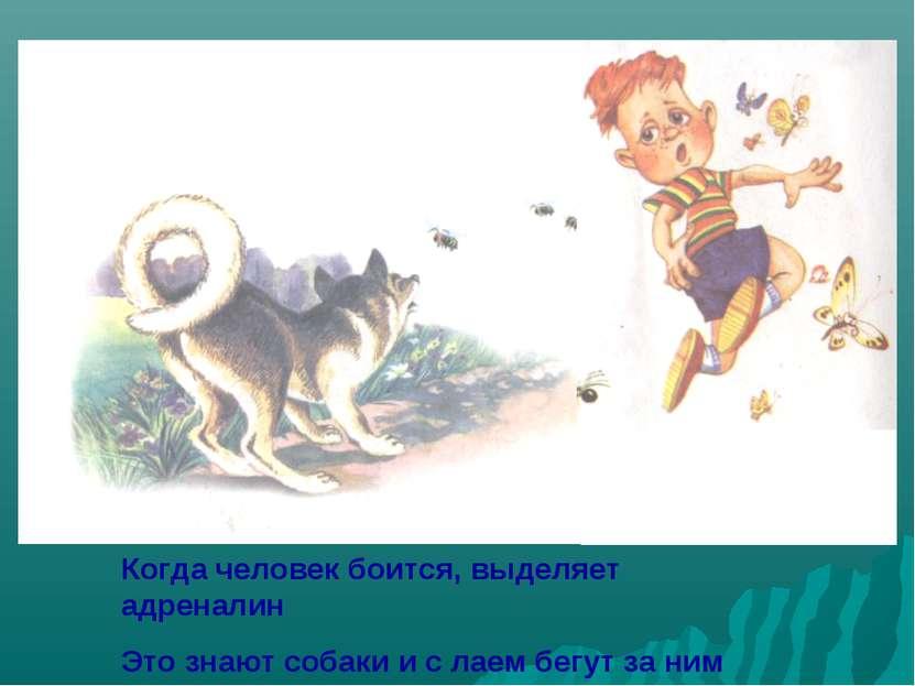 Когда человек боится, выделяет адреналин Это знают собаки и с лаем бегут за н...