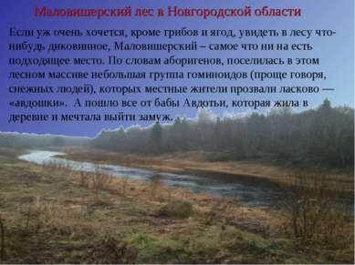 Маловишерский лес в Новгородской области Если уж очень хочется, кроме грибов ...