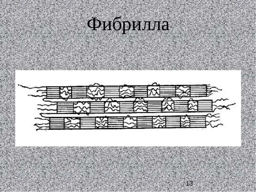 Фибрилла