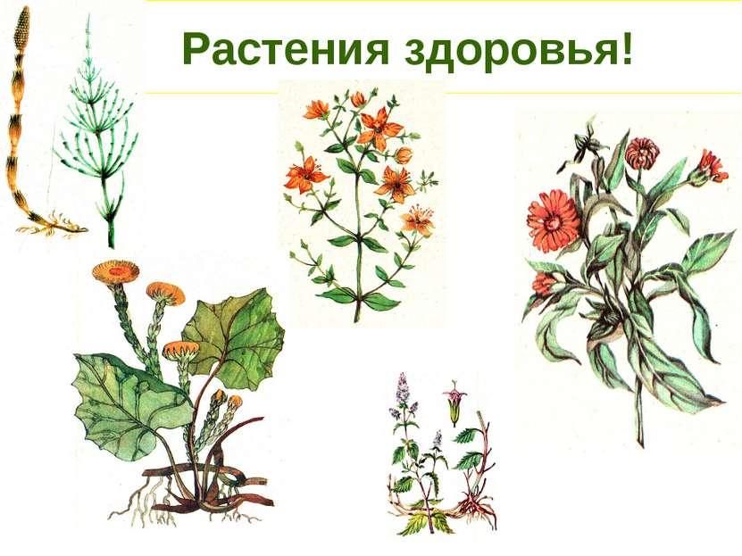 Растения здоровья!