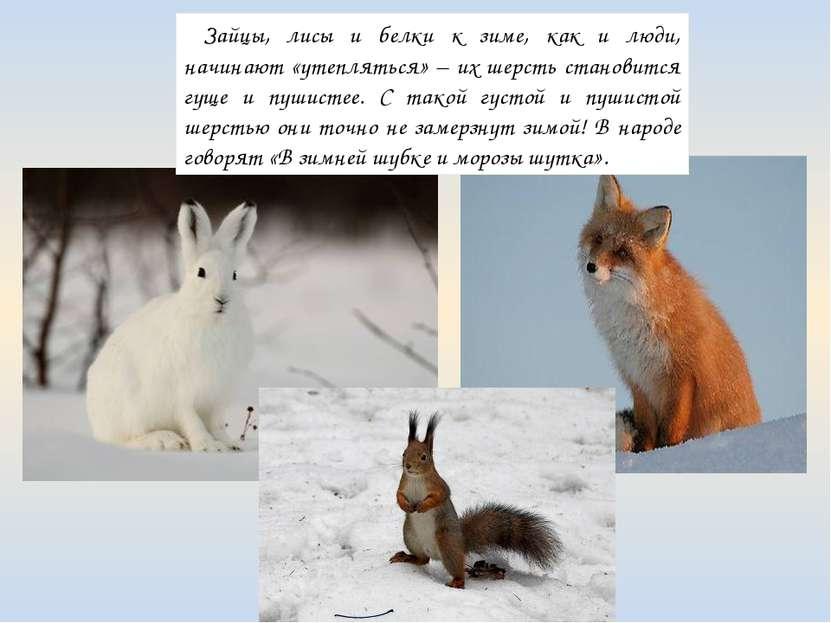 Зайцы, лисы и белки к зиме, как и люди, начинают «утепляться» – их шерсть ста...