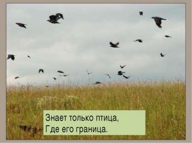 , Знает только птица, Где его граница.