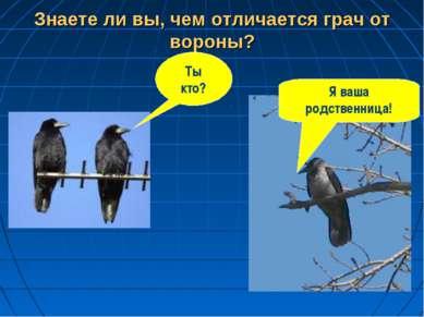 Знаете ли вы, чем отличается грач от вороны? Ты кто? Я ваша родственница!