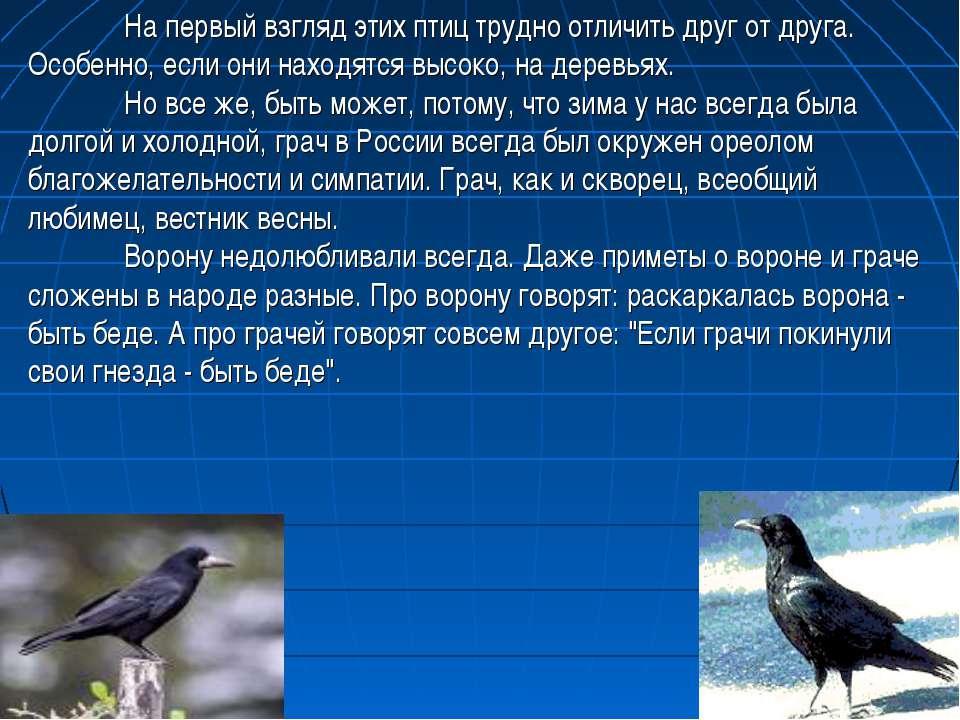 На первый взгляд этих птиц трудно отличить друг от друга. Особенно, если они ...
