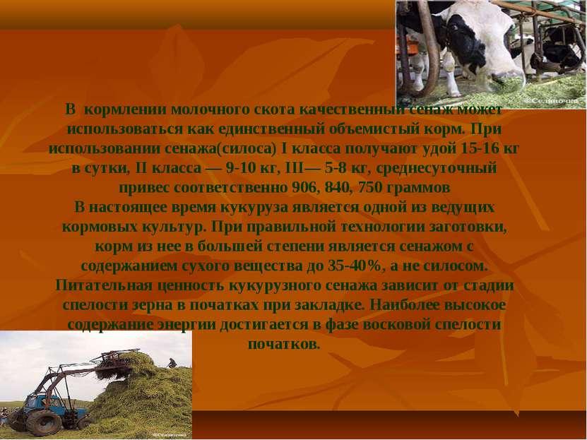 В кормлении молочного скота качественный сенаж может использоваться как единс...