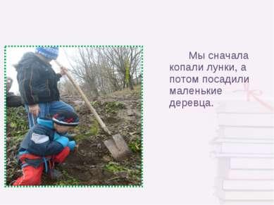 Мы сначала копали лунки, а потом посадили маленькие деревца.