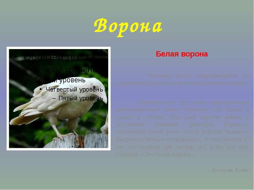 Ворона Белая ворона Человек, резко выделяющийся из окружающей среды теми или ...