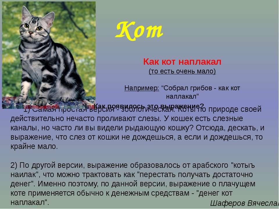 1) Самая простая версия - зоологическая. Коты по природе своей действительно ...