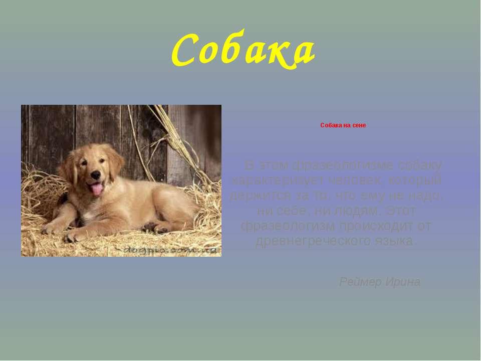 Собака Собака на сене В этом фразеологизме собаку характеризует человек, кото...