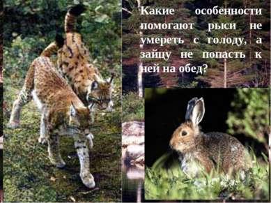 Какие особенности помогают рыси не умереть с голоду, а зайцу не попасть к ней...