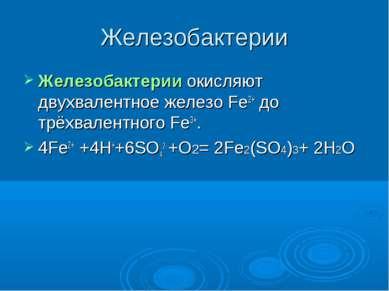 Железобактерии Железобактерии окисляют двухвалентное железо Fe2+ до трёхвален...