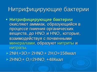 Нитрифицирующие бактерии Нитрифицирующие бактерии окисляют аммиак, образующий...