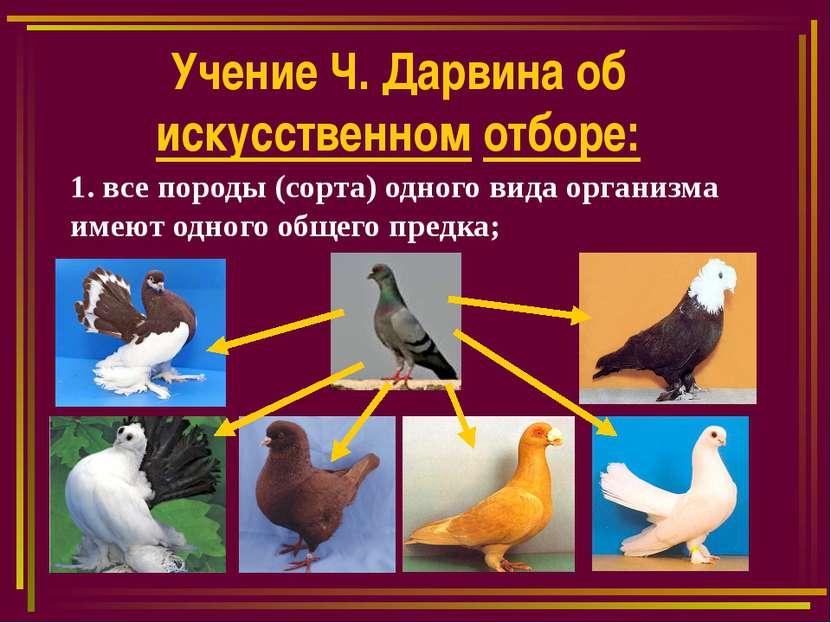 Учение Ч. Дарвина об искусственном отборе: 1. все породы (сорта) одного вида ...