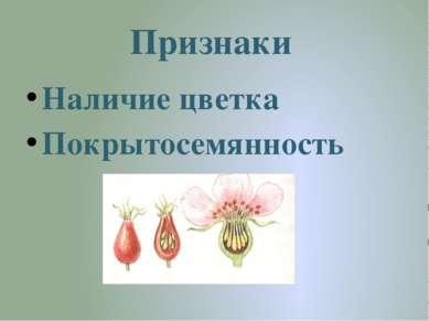Признаки Наличие цветка Покрытосемянность