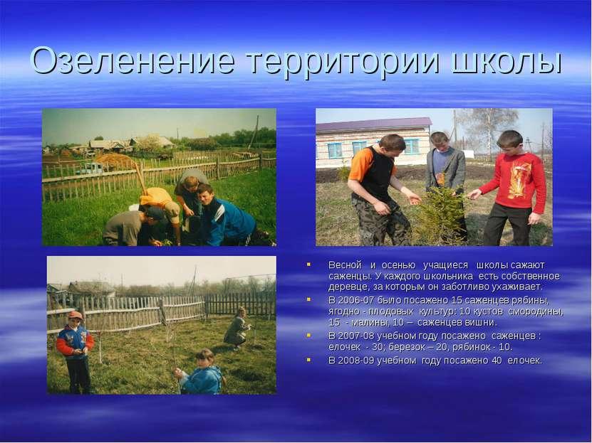 Озеленение территории школы Весной и осенью учащиеся школы сажают саженцы. У ...