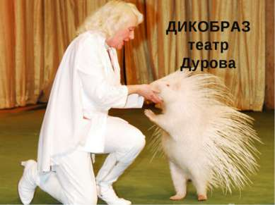 ДИКОБРАЗ театр Дурова