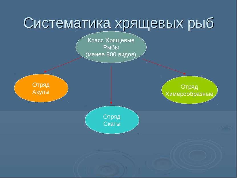 Систематика хрящевых рыб Класс Хрящевые Рыбы (менее 800 видов) Отряд Акулы От...