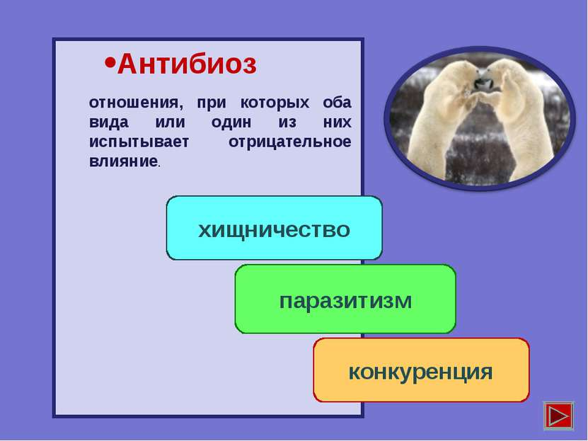 Антибиоз хищничество паразитизм конкуренция отношения, при которых оба вида и...