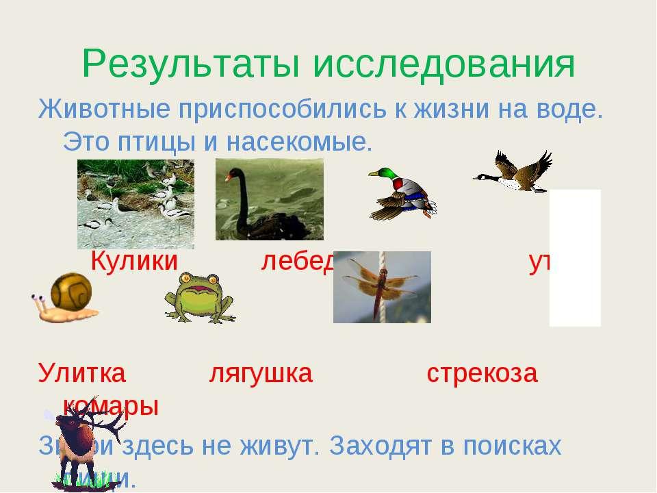 Результаты исследования Животные приспособились к жизни на воде. Это птицы и ...