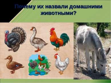 Почему их назвали домашними животными?