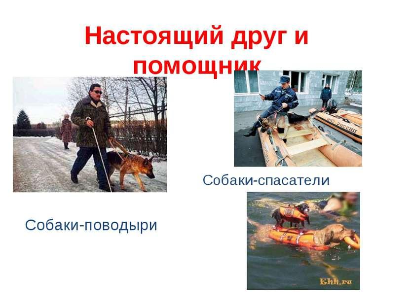 Настоящий друг и помощник Собаки-поводыри Собаки-спасатели