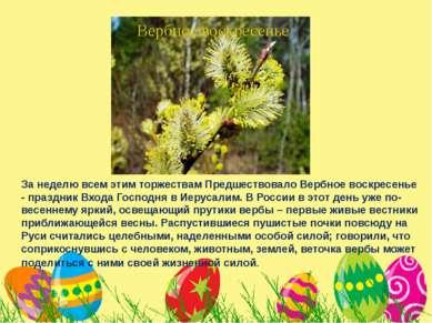 За неделю всем этим торжествам Предшествовало Вербное воскресенье - праздник ...