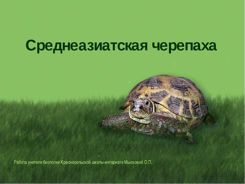 Среднеазиатская черепаха Работа учителя биологии Красносельской школы-интарна...