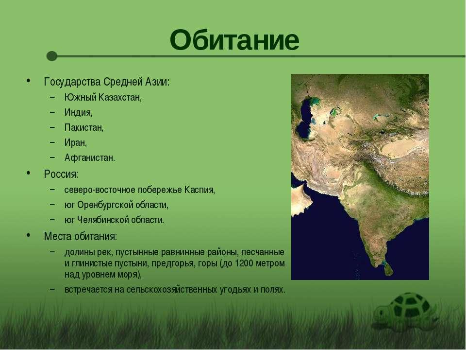 Обитание Государства Средней Азии: Южный Казахстан, Индия, Пакистан, Иран, Аф...