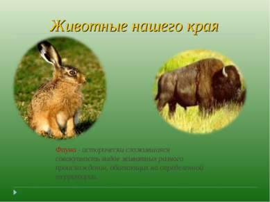 Животные нашего края Фауна - исторически сложившаяся совокупность видов живот...